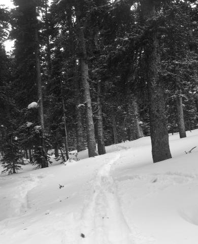 Trail in Brainard Lake