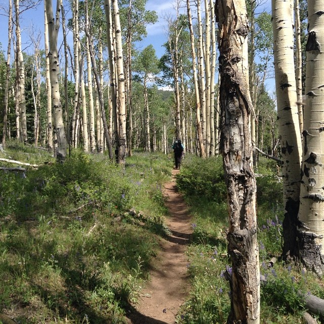 A lovely #backpacking trip w Mrs Mags in the Buffalo Pks Wilderness #Colorado